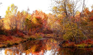 Yates Mill pond in fall